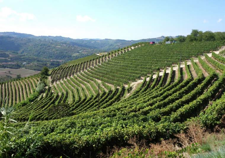 23 mondo bike tours piedmont vineyards