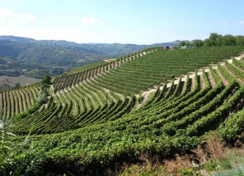 23 mondo bike tours piedmont vineyards