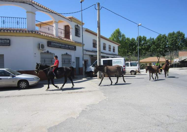 Ponies walking through town