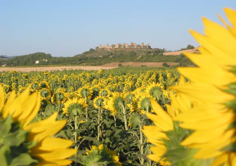 Vista monterigg and sunflowers