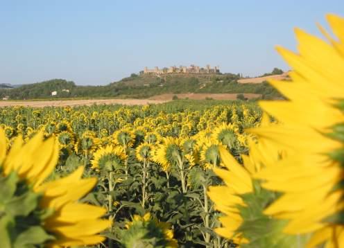 Vista monterigg and sunflowers
