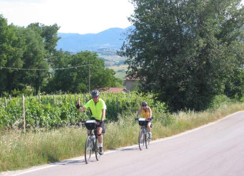 Biking by vineyards